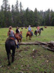trail_ride_cow.jpg